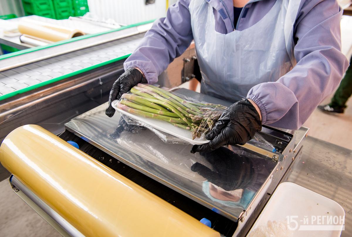 В Северной Осетии начался сбор урожая спаржи Подробнее: https://region15.ru/v-severnoj-osetii-nachalsya-sbor-urozhaya-sparzhi/